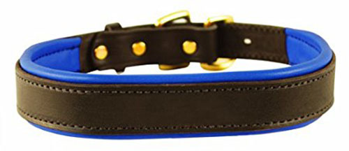 6. Perri's Padded Leather Dog Collar