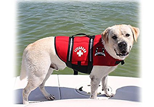 3. Paws Aboard Red Neoprene Life Jacket