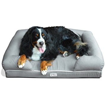 7. PetFusion with Solid Memory Foam