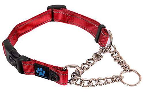 6. Max and Neo Dog Gear