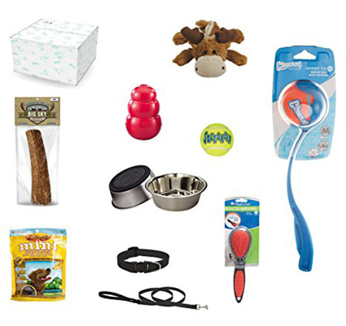 10. Complete Adult Dog Starter Kit Bundle