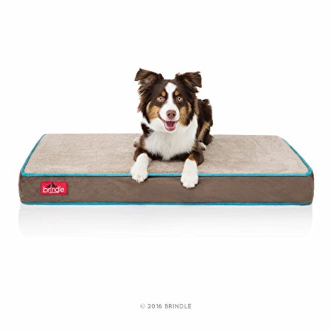 3. Brindle 4 Inch Solid Memory Foam Orthopedic Dog Bed